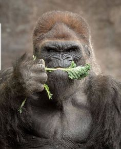 Someone here doesnt like vegetables Tag someone whos like this .For more wild photos us nature. Wildlife Nature, Nature Animals, Baby Animals, Funny Animals, Cute Animals, Wild Animals, Animal Babies, Fur Babies, Wildlife Photography