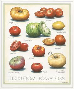 Prints for Sale - Cook's Illustrated Art — John Burgoyne IllustrationJohn Burgoyne Illustration Food Charts, Tomato Garden, Heirloom Tomatoes, Growing Tomatoes, Food Illustrations, Fruits And Vegetables, Organic Gardening, Cooking, Albinism