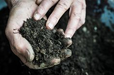 Farmers are Capitalizing on Carbon Sequestration: How Much is Your Carbon-Rich Soil Worth? - http://modernfarmer.com/2016/04/carbon-sequestration/?utm_source=PN&utm_medium=Pinterest&utm_campaign=SNAP%2Bfrom%2BModern+Farmer