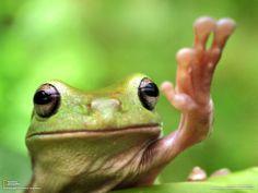 Tree frog High Paw! makes me smile