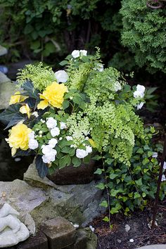 There are begonias, double impatiens, ivy, maidenhair fern and one other type of fern in this container.