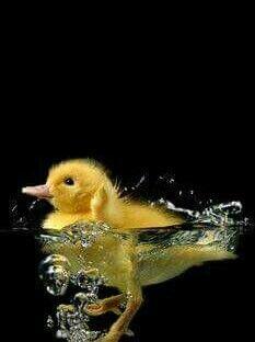 Beautiful Little Chick!