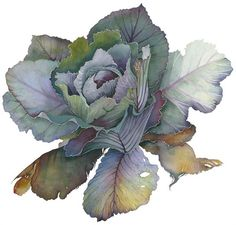 Cabbage: Jane Murray is a painter working mainly in watercolour. Her work varies from detailed botanical studies to larger out-of-scale compositions, tending towards the abstract. Recently her starting point has been the flowers, leaves and vegetables in her own garden.