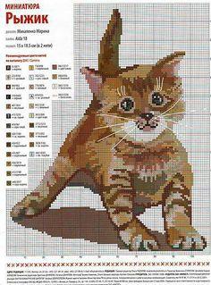 keresztszemes cica