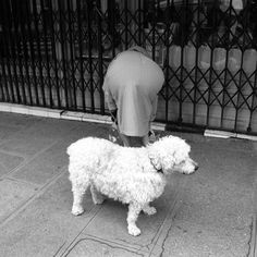 Vivian Maier Street Photography Rumble Winners Announcement! - Lomography