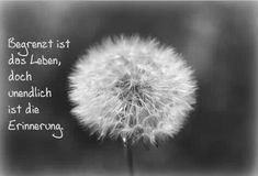 Limited is the life, but the memory is infinite ♥ - Trauer & Seelenschmerz - Neujahr German Quotes, German Words, Ways To Be Happier, True Words, Grief, Decir No, Quotations, Life Quotes, About Me Blog