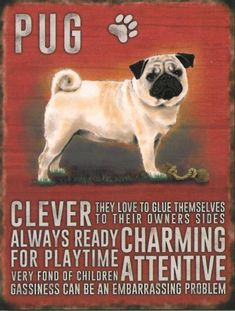 BLACK LABRADOODLE VINTAGE RETRO 20 CM STYLE METAL HANGING SIGN BREED CHARACTER