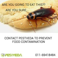 Prevent food contamination of #Pest. Get in touch with #pestcontrol experts now! Call- 01169418484 Visit- www.pestveda.com #pestcure