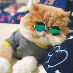 Pet Cat Glasses Dog Glasses Pet Products For Little Dog Cat Eye-wear Dog Sunglasses Photos Props Accessories Pet Supplies Cute Cats, Funny Cats, Funny Animals, Cute Animals, Little Dogs, Pet Dogs, Dog Cat, Dog With Glasses, Cat Sunglasses