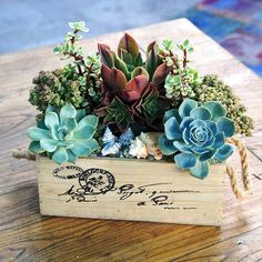 Recreate this rustic, chic succulent piece to maintain your home's classic charm. It takes minimal effort and we promise you won't break a sweat. Purchase a vintage box, or use one your own, and place your favorite succulents inside to complete this masterpiece.
