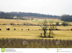 Open Farmland - Virginia - Download From Over 29 Million High Quality Stock Photos, Images, Vectors. Sign up for FREE today. Image: 4220750