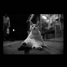 https://flic.kr/p/yZ7f8P | Mayu September 2015  #cat #smallcats #blackandwhitephotography