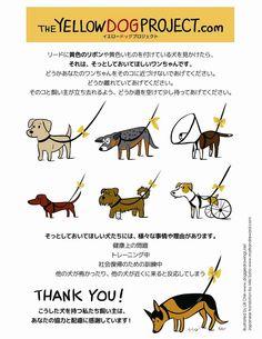 やっと見つけた。日本語バージョンのポスター!! これは大切〜!!どんどん広めたい。 学ぼうとしない無知な飼い主に腹を立てるより、ここから学んでもらえるかも〜。 ドンドン拡散お願いします!!!