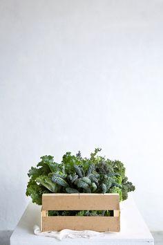 Different varieties of fresh kale from the garden! / Let It Be Cosy (Vegan + GF)