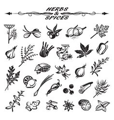 Herbs and spices vector icons - by alexkava on VectorStock®