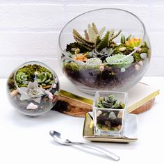Edible Terrariums! I HAVE to try making these....they look gorgeous and delicious!