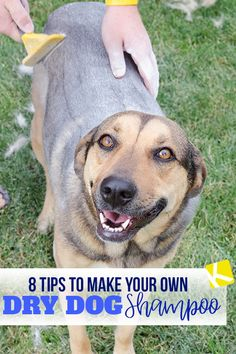 8 Tips to Make Your Own Dry Dog Shampoo - Does your dog hate baths? Well here's how you can make your own dog shampoo. Perfect for winter when you don't want to get your pets wet! Puppy Care, Dog Care, Dry Dog Shampoo, Do It Yourself Organization, Cheap Pets, Old Dogs, Dog Training, Your Pet, Puppies