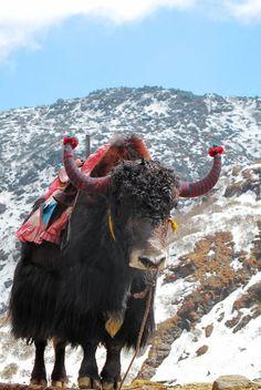 North of Sikkim wt yuk