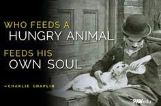Pets N More: Best Quotes for Animal Lovers Charlie Chaplin, Animal Lover Quotes, Lovers Quotes, Cafe Quotes, Charles Spencer Chaplin, Laughter Quotes, Majestic Animals, New Journey, Silent Film