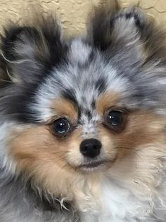 Sprout of My Pom Pals