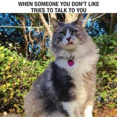 This look is constantly on my face...