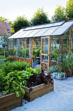 Working vegetable garden with greenhouse and wooden raised beds