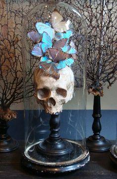 Cabinet de curiosité (oeuvres de Jean-Pierre et Anne Laurenté), cloche, skull, butterflies