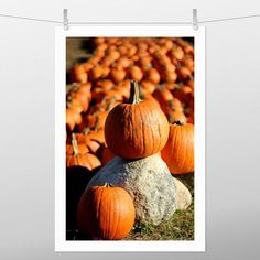 Massachusetts, Right To Choose, Fine Art Photography, Order Prints, Note Cards, New England, Pumpkins, Photo Gifts, Traditional