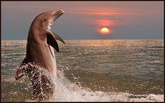 Delfin im Abendlicht http://fc-foto.de/27232287