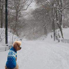 Snowflake Dog Sweater Boys & Girls Size M by Charliecloset on Etsy, $75.00
