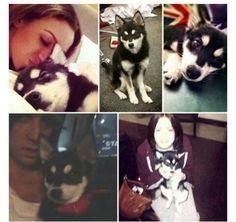 Top left:Dani with Loki bottom left:Andy with Loki bottom right:Gemma with Loki. I'm jealous of this dog. Its so cuuuuuttte