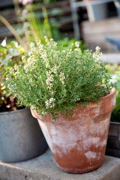 How to Start an Urban Herb Garden #urbangarden, #gardening, #herbs
