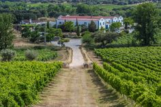 Monte da Ravasqueira winery #Alentejo #Arraiolos #Portugal
