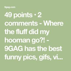 49 points • 2 comments - Where the fluff did my hooman go?! - 9GAG has the best funny pics, gifs, videos, gaming, anime, manga, movie, tv, cosplay, sport, food, memes, cute, fail, wtf photos on the internet!