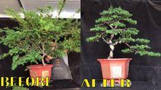 How to bend a bonsai - great bonsai bending skills Compost Tumbler, Indoor Bonsai Tree, Bonsai Garden, Bending, Garden Art, Planters, Videos, Youtube, Inspiration
