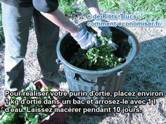 recette purin ortie fait maison engrais insecticide Planters, Aide, Plus Populaire, Oui, Deco, Gardens, Farmhouse, Vegetable Garden, Homemade Insecticide