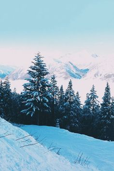 youre not there #snow #forest #christmas #cold #winter #pinetrees #trees #mountains #L4L #photooftheday #F4F