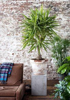 Pflanzen für jeden Standort - [LIVING AT HOME]