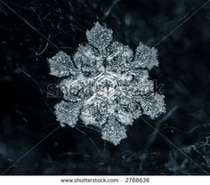 Real Snowflake Pictures | Real Snowflake Stock Photo 2788636 : Shutterstock
