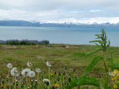 #Island Foto: weltweiser-Team