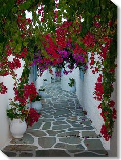 Bougainvillea Path Weatherprint Art