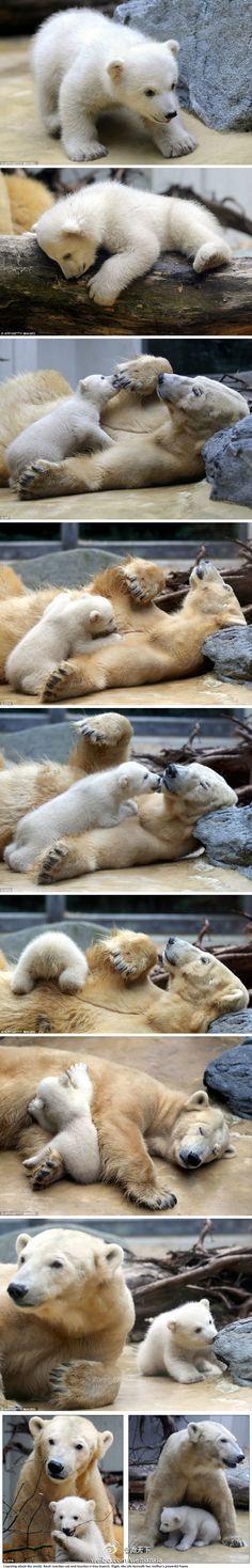 Loveee polar bear cubs!! How cute are these guys?!