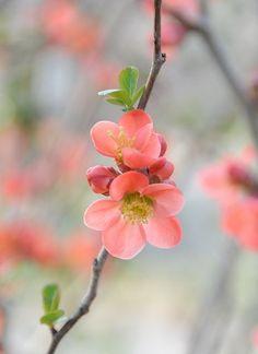 Die Blende wurde hier so gewählt, dass die Blüten und der Zweig scharf dargestellt wurden. Die Blende war weit geöffnet und der Abstand zum Hintergrund entsprechend groß.