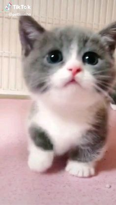 So many cute kittens videos compilation 2019 Cute Baby Cats, Cute Kitten Gif, Cute Funny Animals, Cute Baby Animals, Cute Dogs, Cute Babies, Funny Cats, Kittens And Puppies, Cute Cats And Kittens