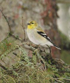 Birds, Landscape, Animals, Animales, Scenery, Animaux, Bird, Landscape Paintings, Corner Landscaping
