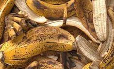 engrais naturel peau de banane Potager Bio, Permaculture, Horticulture, Gardening Tips, Food, Branches, Cactus, Diy, Club