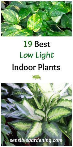 14 best indoor shade plants for low light rooms pinterest low