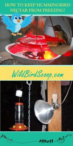 How to keep Hummingbird feeders from freezing? Learn more at http://www.wildbirdscoop.com/keeping-hummingbird-nectar-from-freezing.html