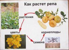 материалы для скачивания от Е. Леоновой