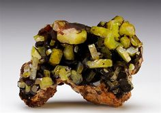 A fine yellow to green crystal specimen of Mimetite from the Endeavor Mine, New South Wales, Australia. Well-developed prismatic and tabular crystals of Mimetite measuring to 1.2cm are intergrown over a red-brown matrix.
